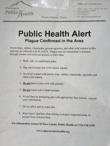Bubonic Plague in eastern Colorado